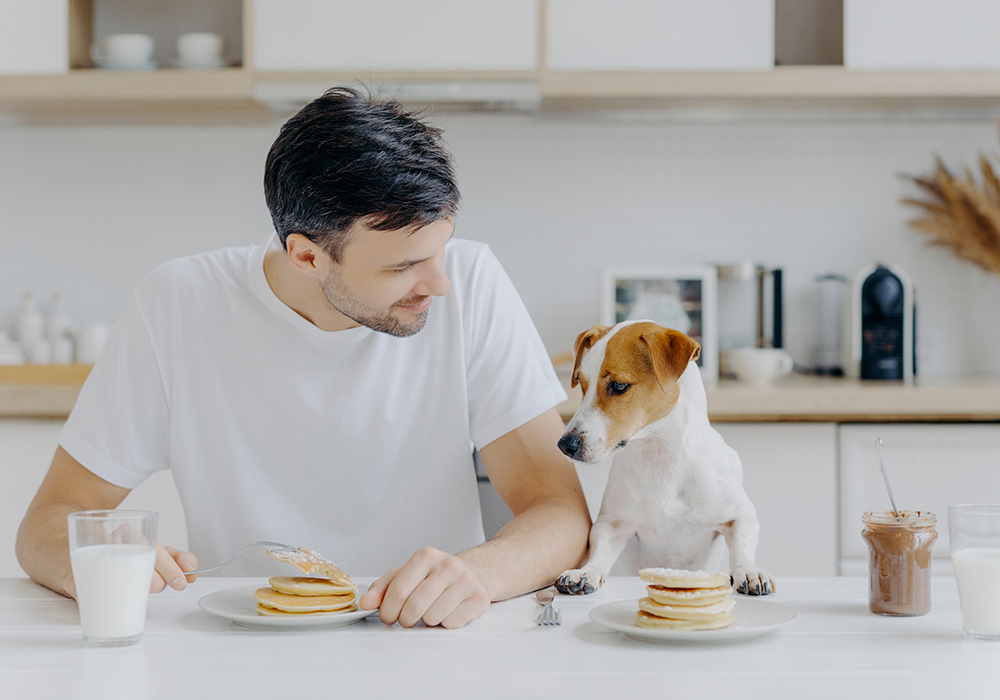 Colazione con il cane in vacanza