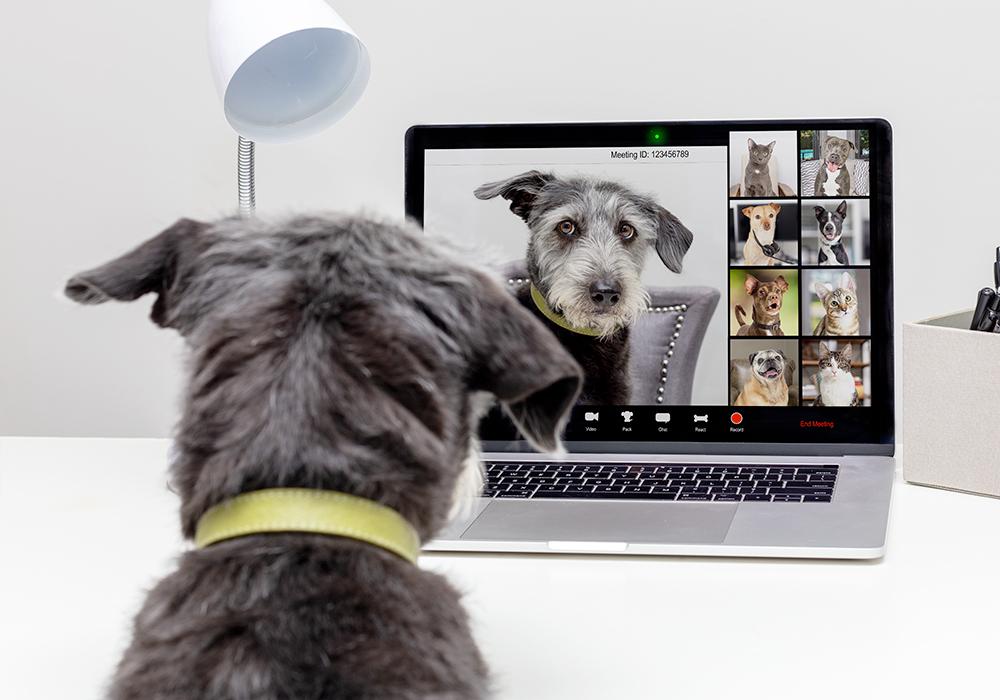 Pubblica le foto del tuo cane al Residence Solei
